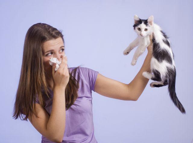 Аллергия на шерсть кота что делать