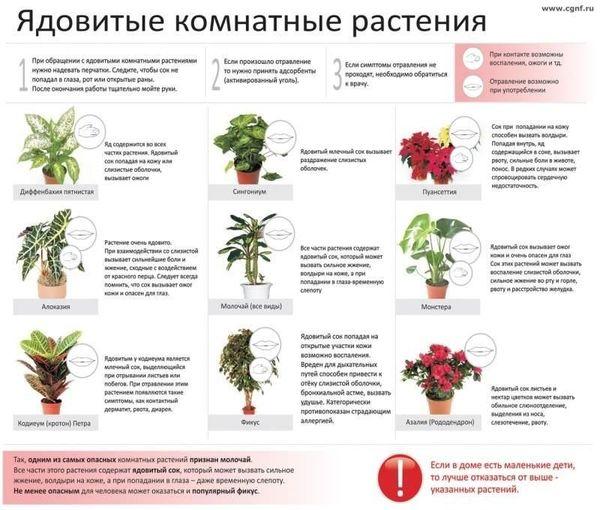 Список домашних растений