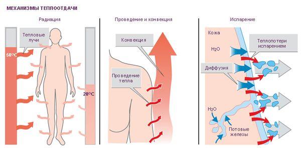 Схема реакции кожи на тепло