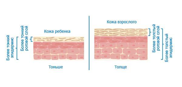 Разница между детской и взрослой кожей
