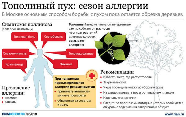 Схема влияния цветения тополя на человека
