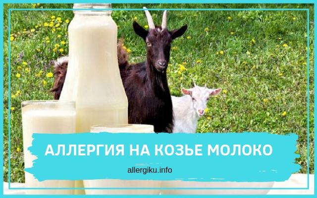 козы на лугу