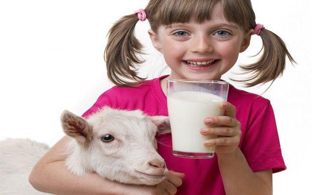 девочка и коза