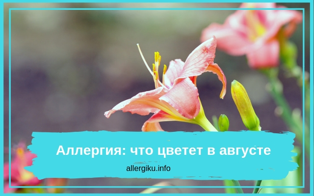 Распустившийся цветок
