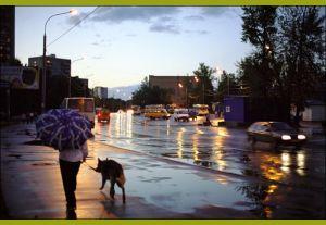 Вечерняя прогулка с собакой