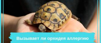Сухопутная черепаха на руках