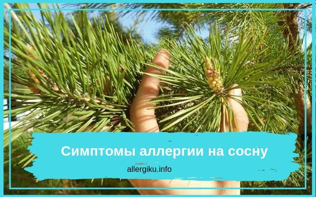 Иголки дерева в руке