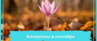 Цветок среди опавших листьев