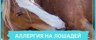 аллергия на лошадей
