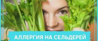 аллергия на сельдерей